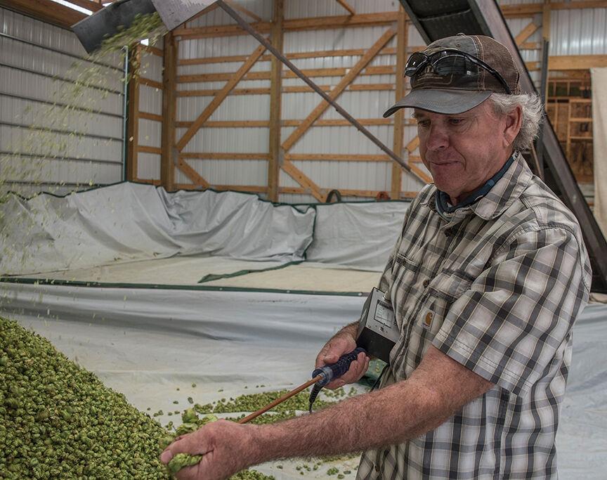 Mungo's hop farm