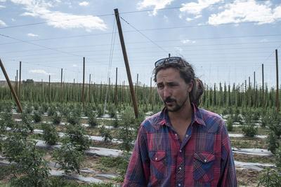 Hemp industry booming in Western Colorado | Local News