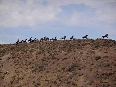 OUTDOORS: Wild Horses