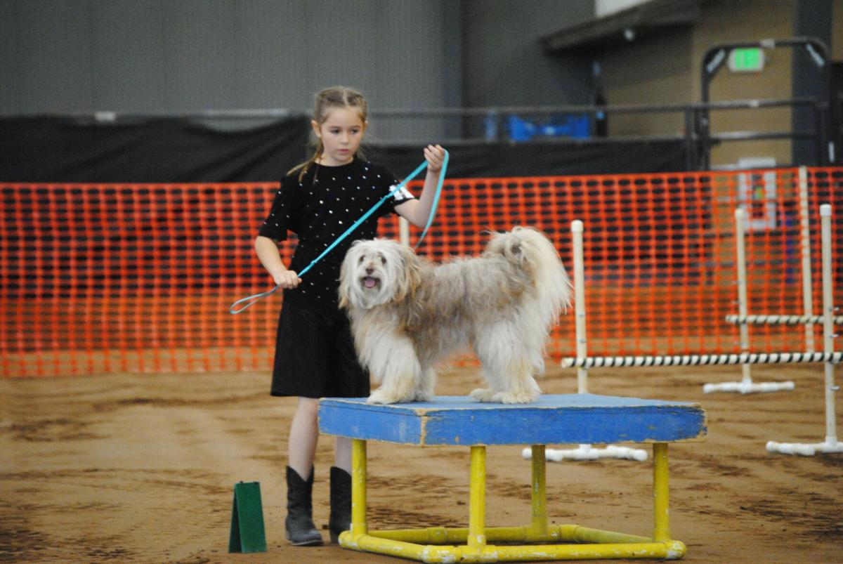 Young dog show contestant (small)