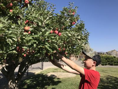 OUTDOORS: It's time to get out and enjoy pruning your fruit trees
