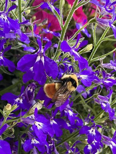 210611-outdoors-gardening