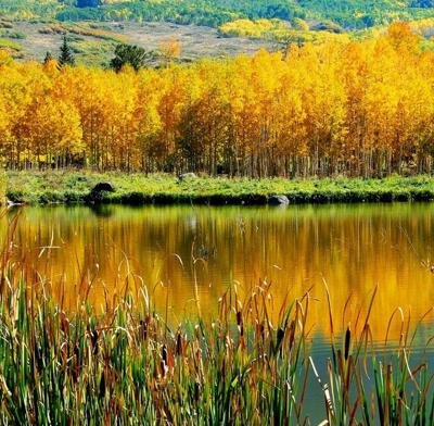 Forest Service offers tips to enjoy leaf-peeping season