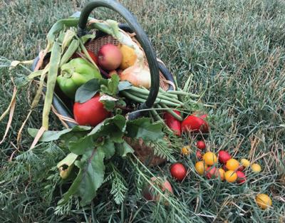 Growing and harvesting homegrown produce