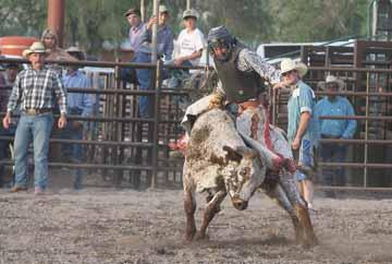No bull: Bull-riding and Colorado Pro Rodeo postponed due to gathering limitations during COVID-19