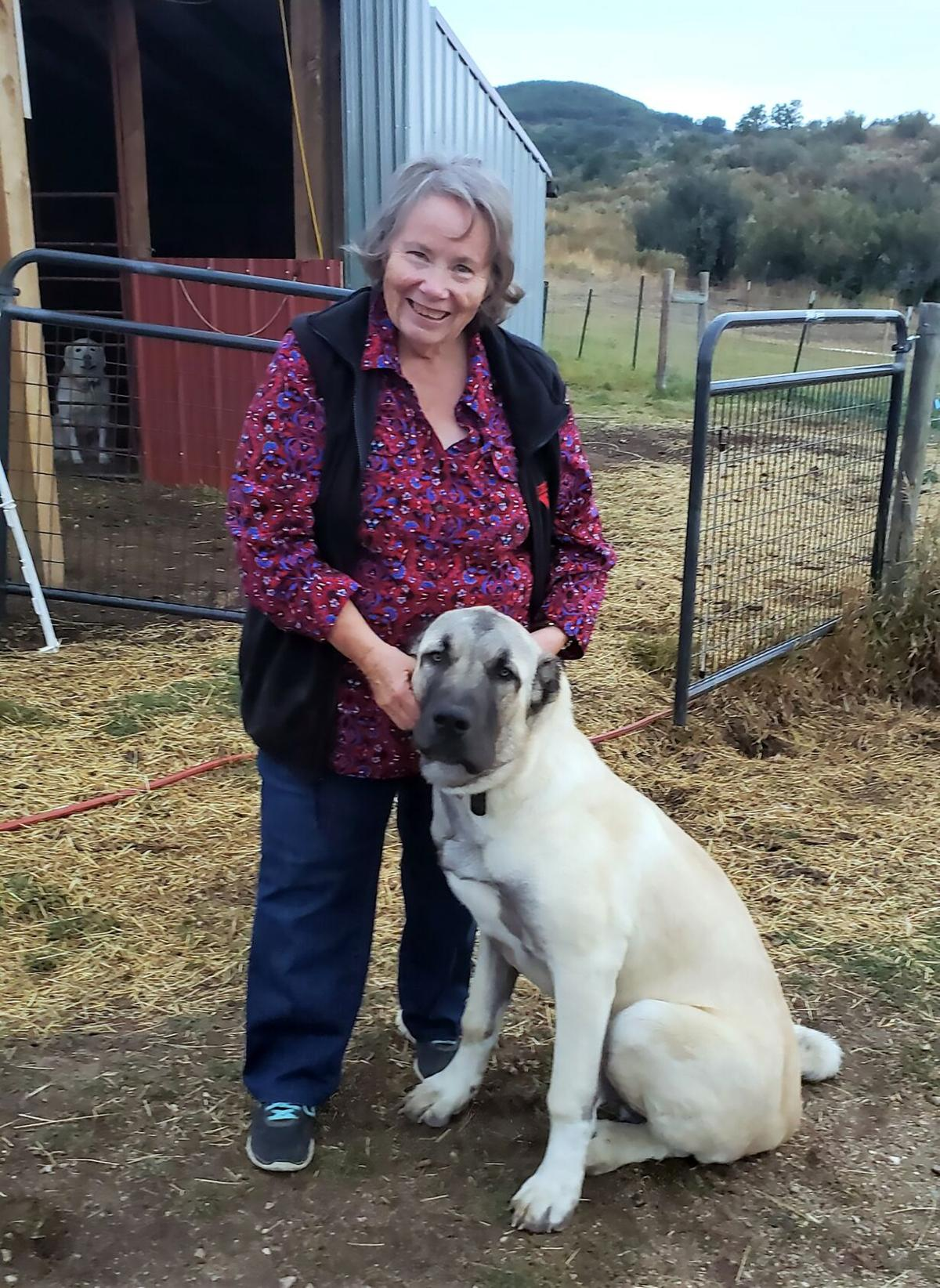 Jo Stanko and stock dog