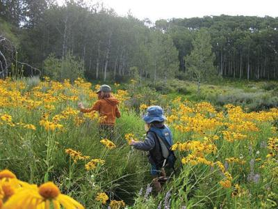 Kids playing in a sunflower meadow