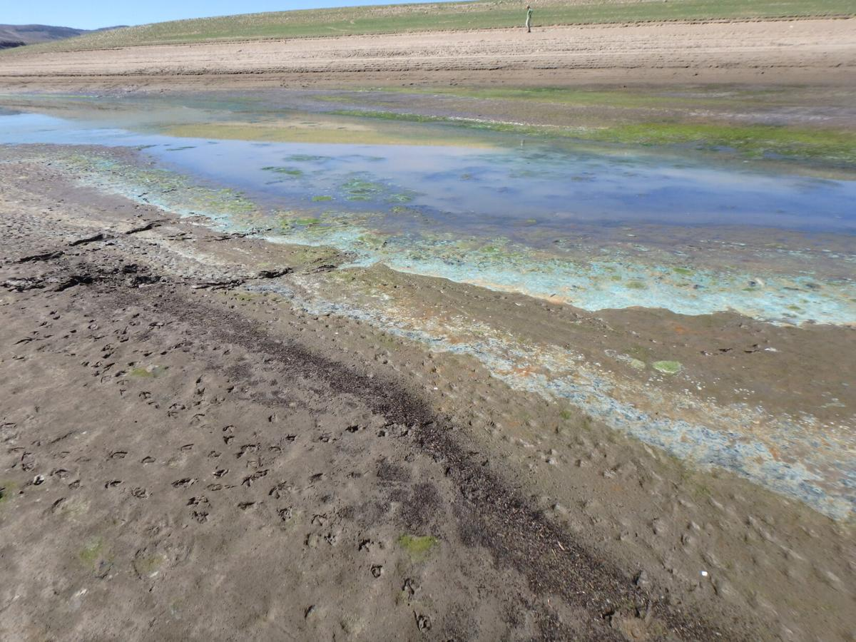 Cautions issued after toxic algae found in area lakes