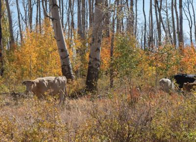 BLM looks to overhaul grazing regulations