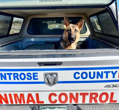 After days of efforts, abandoned German shepherd taken to safety