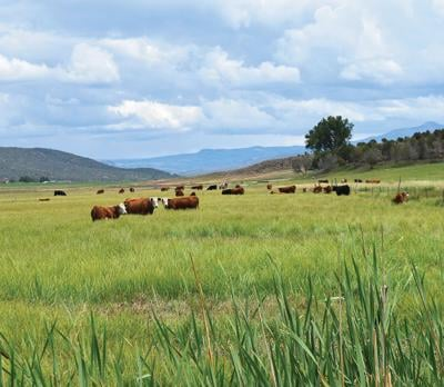 Beef business faces petition wars