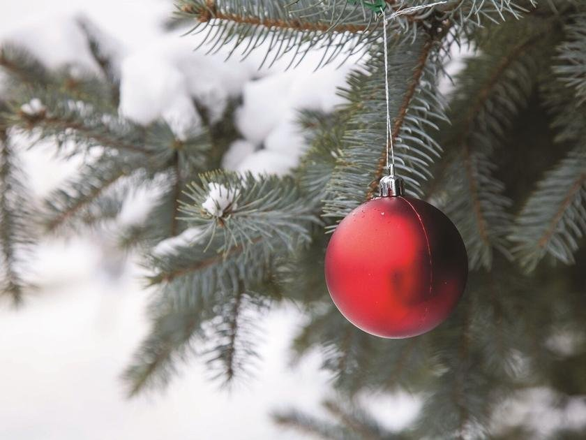 Purchase Christmas tree permits online   Complimentary