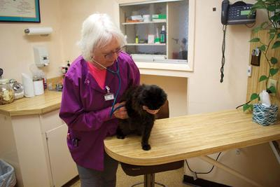 Pioneer veterinarian Bettye Hooley retires and closes Morningstar Veterinary