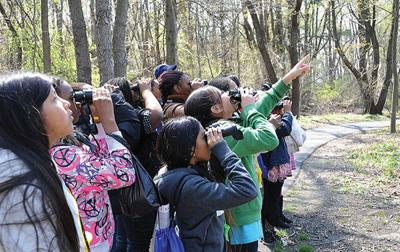 Birds of a feather — A contest to grow your family birding skills