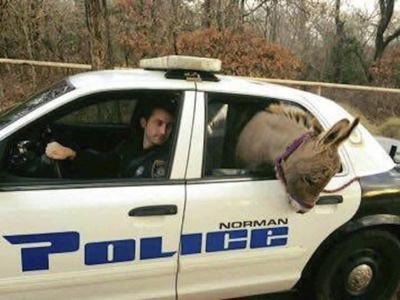 Donkey that became viral sensation dies