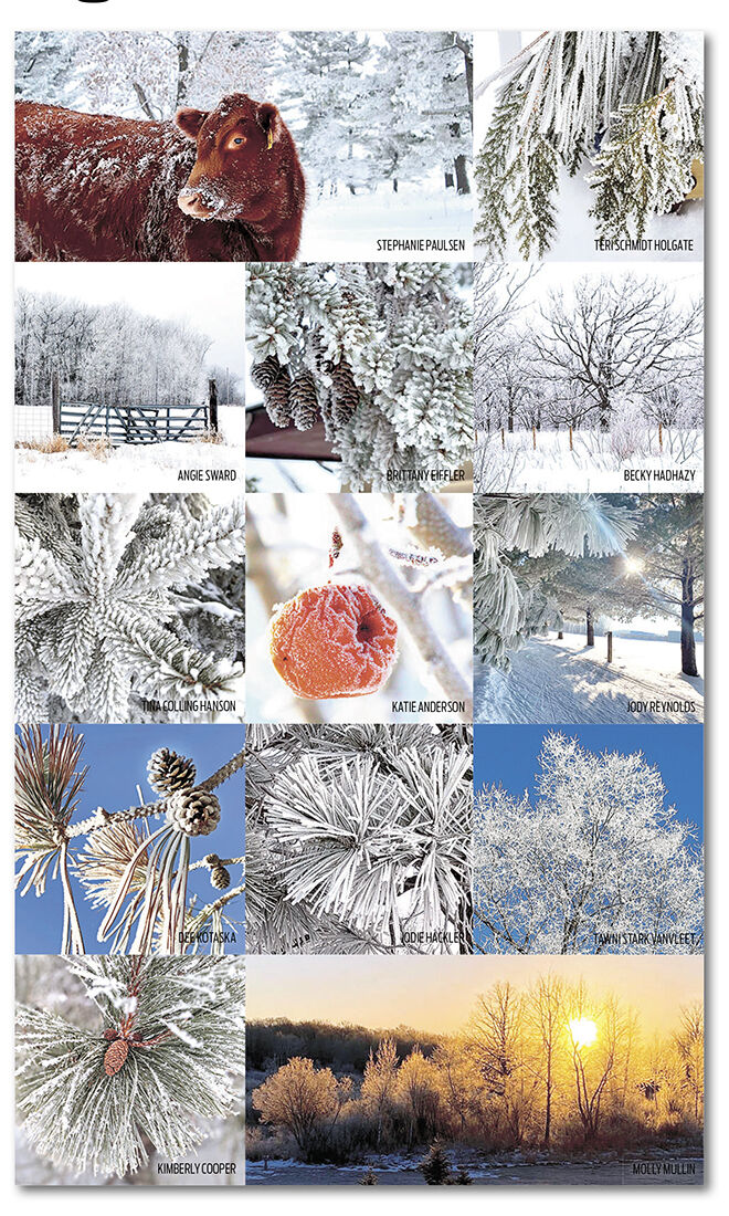 Ideal conditions cover county  in nature's glitter: hoar frost