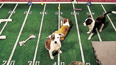 BCHS puppys make Puppy Bowl appearance