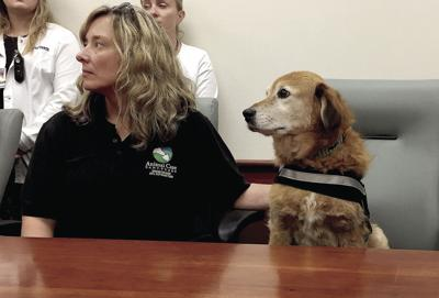 Sayre: Therapy dogs bring a light-hearted touch to local health care