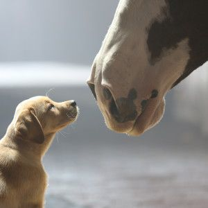 Is it a beer commercial or a puppy commercial?