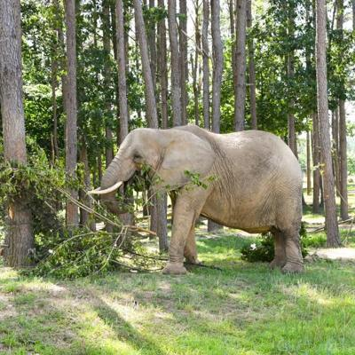 Nosey's former owner could lose exhibiting license