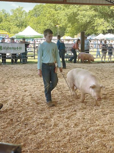 Registration now open for 4-H Pig Squeal