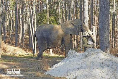 Ruling: Nosey to remain in county custody