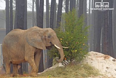 County granted custody of elephant