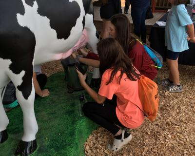 Expo Milking