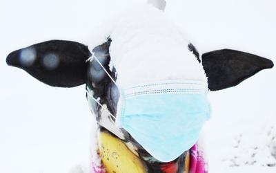 Sheep Mask Hailey