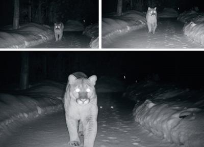 lion.jpg (copy)