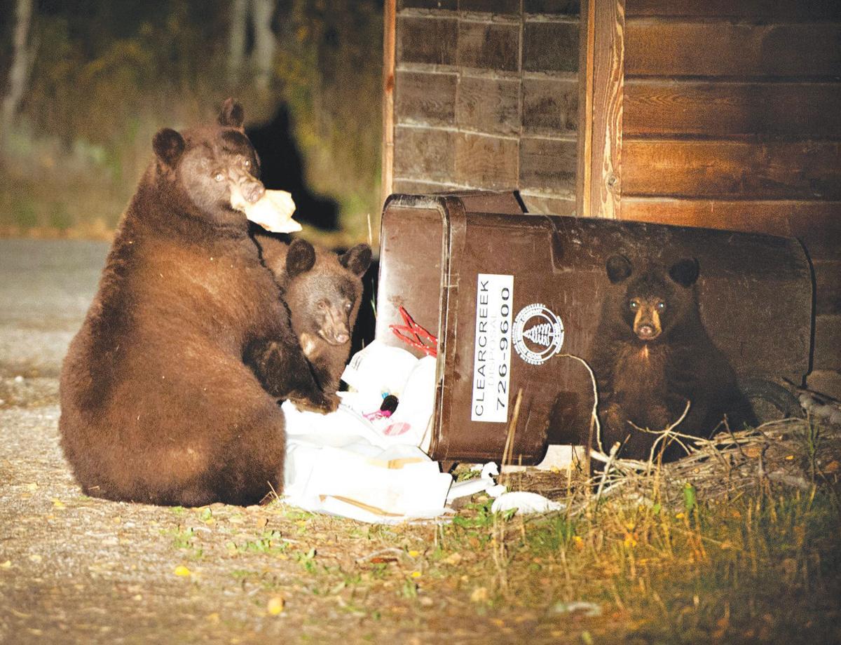 20-02-14 bears ROLAND.jpg