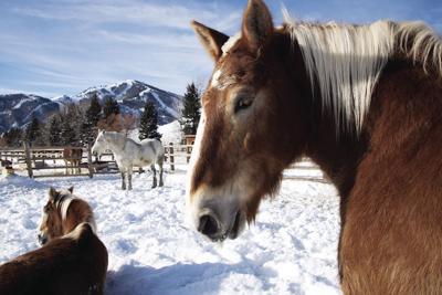 19-09-01 Sun Valley Horses 1 Roland