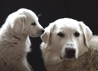 20-01-10 Sheep Dog Rescue 9 Roland.jpg