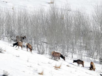 Elk Penny Lake