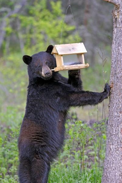 Fish and Game Bear Birdhouse
