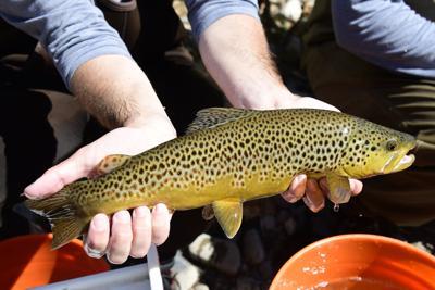 21-09-22 Bigwood River Trout Study 9 Roland.jpg