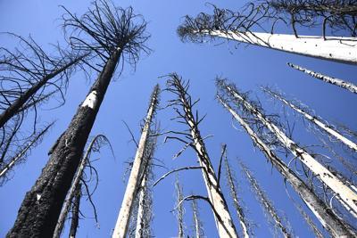 Baker Lake Trees