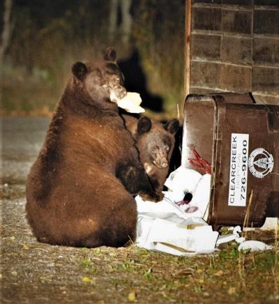 Garbage Bears