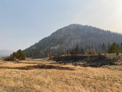 Muldoon Fire Scorched Earth