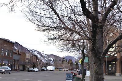 20-03-11 Tree 3 W.jpg