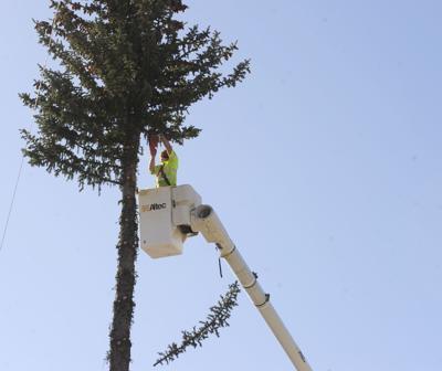 Ketchum Tree Removal