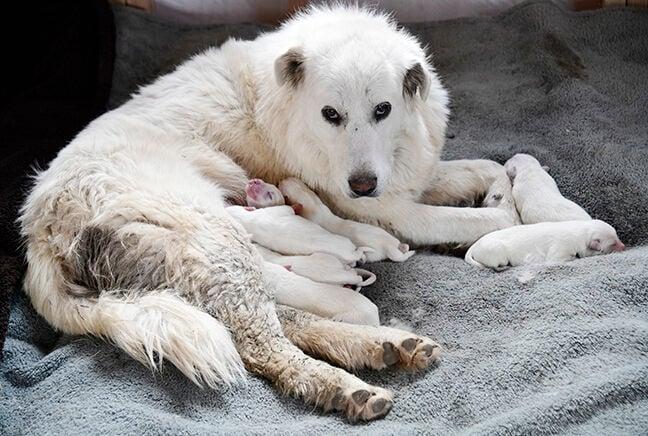 21-04-21 Dog Rescue gary Tickner 3 Roland.jpg