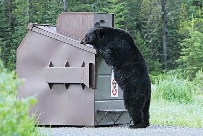 20-04-24 Bear F&G@.jpg