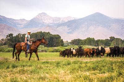 Alderspring Ranch employee