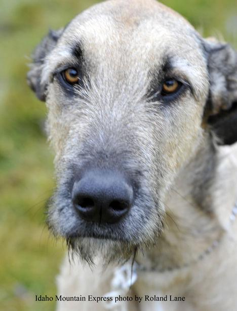 Scotch Pines Dog Training