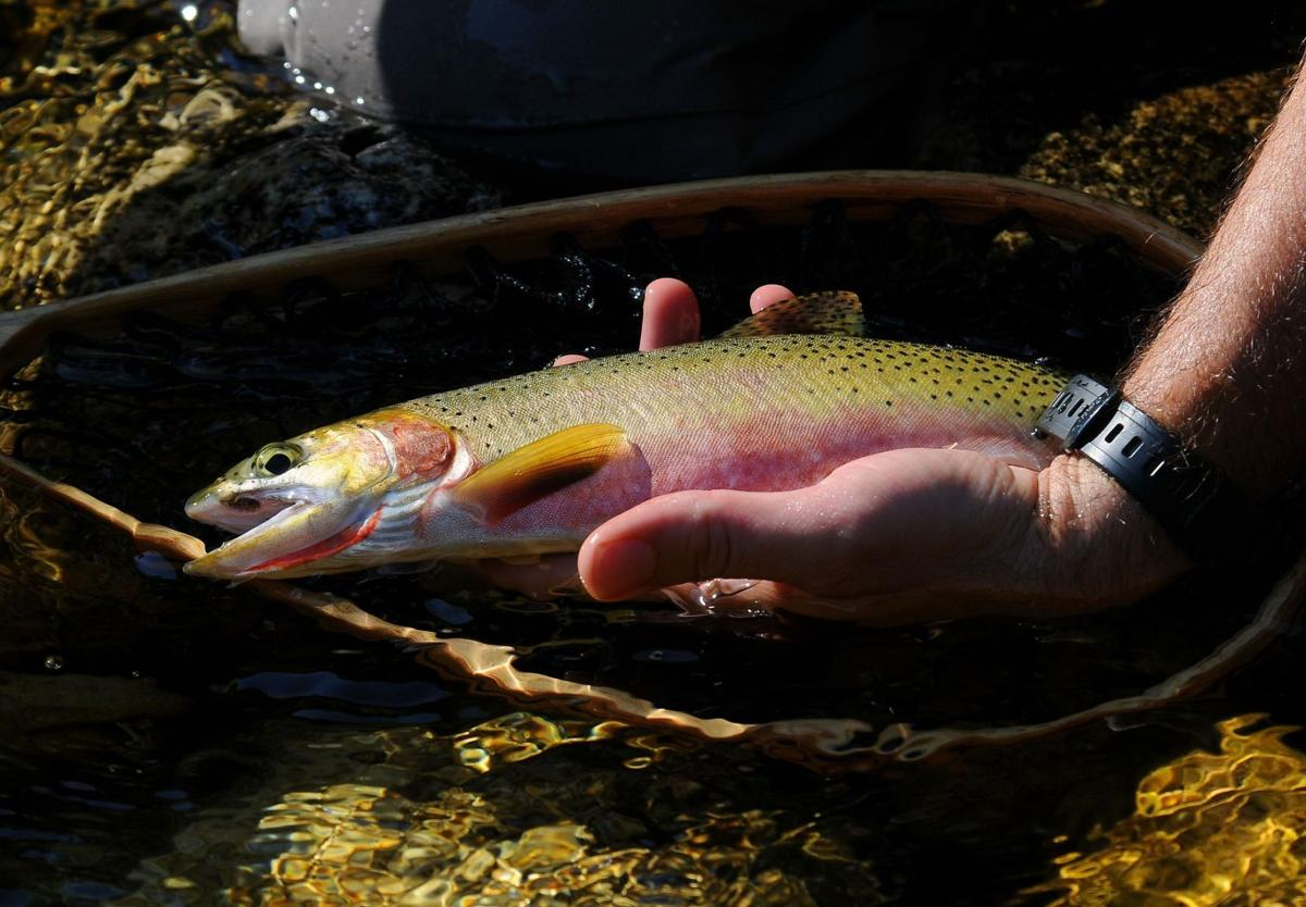 westslope cutthroat trout fish fishing
