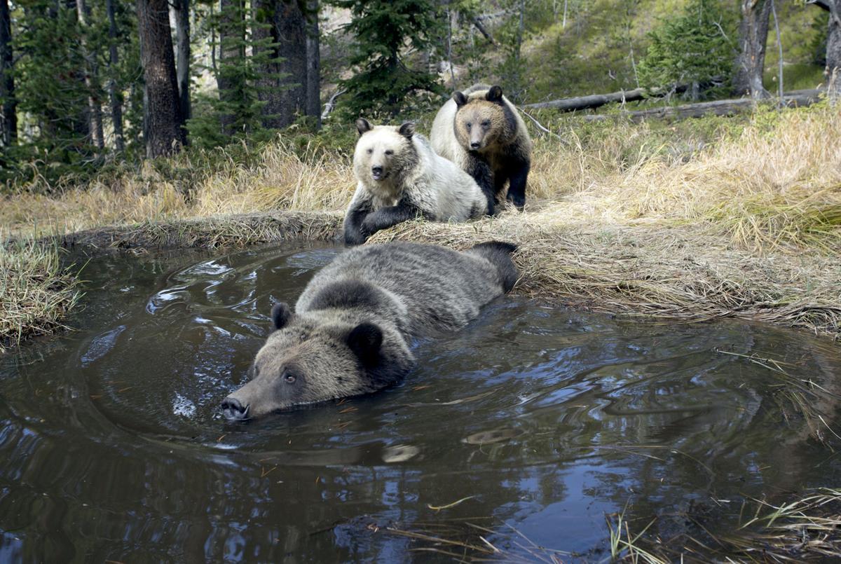 081816 Yellowstone-Quamman-2016-003.jpg