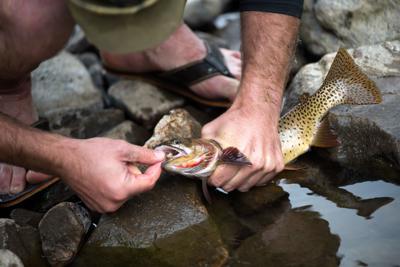 Montana fishing report: Plenty of fall options for walleye