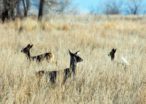North Dakota officials say deer disease spread not imminent
