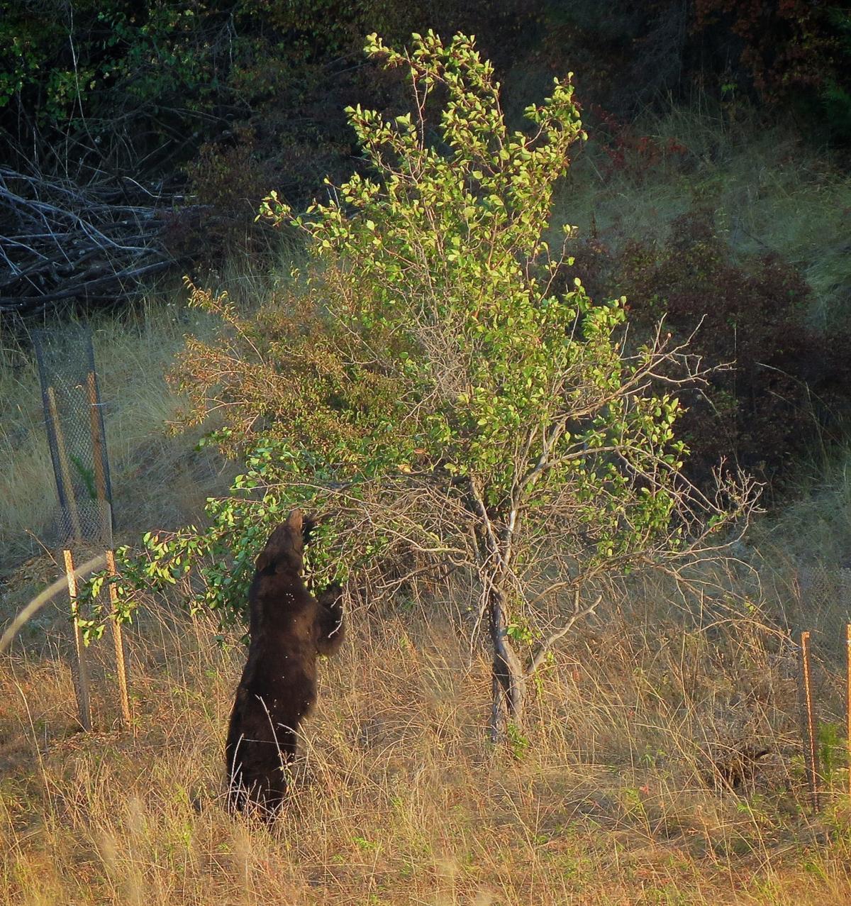 MPG Bear